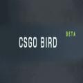 CSGObird.com